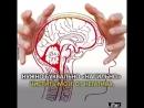 7 фактов о работе мозга 1479930618324-l6cv8a