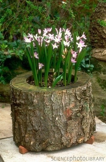Цветник из бревна