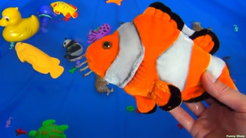 Learn Colors With Zoo Animals In Blue Pool Water Shark Toys For Kids