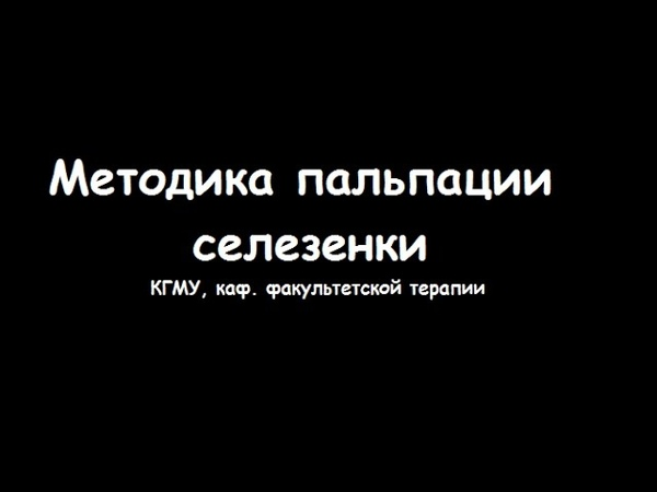 Техника и методика пальпации селезенки - meduniver.com