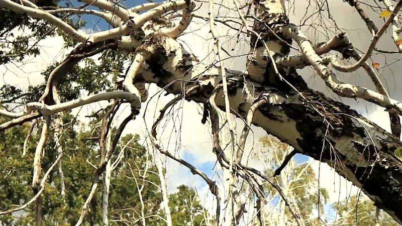 Аномальная Медведицкая гряда