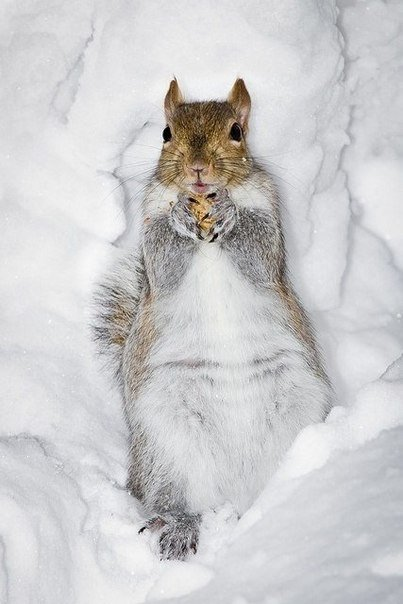 ...ух, тепло под снегом!!!...