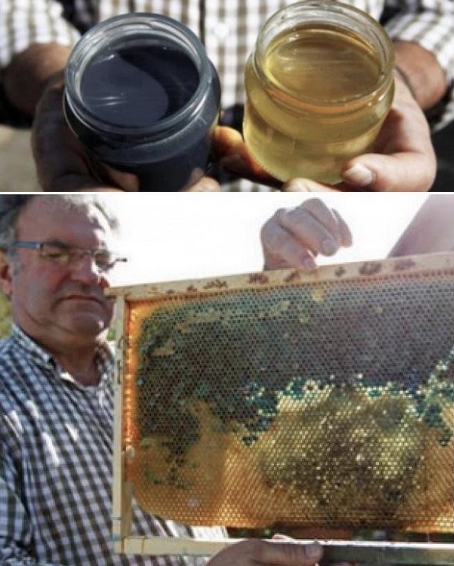 Недалеко от пасеки находится завод M&M, пчелы начали...