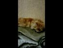 Мася спит храпит