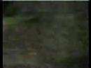 Новые приключения Робин Гуда Робин и золотая стрела 1 часть