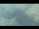 Тайланд, Пхукет - подводный мир на пляже Freedom