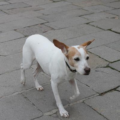 Пёс Тобик, 15 августа , Санкт-Петербург, id579009