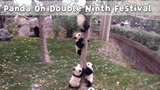 Panda On Double Ninth Festival The Higher You Climb, The More Painful You Fall iPanda