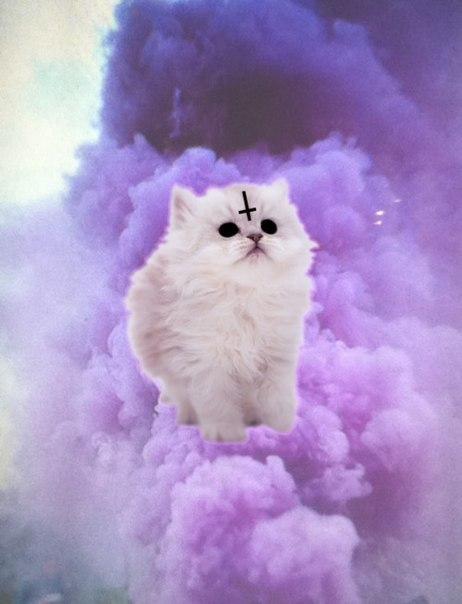 Фото кошки на аву стим - d