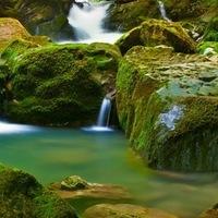 hd обои Водопад, лес, мох 240 x 320 для рабочего стола бесплатно скачать.