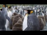 Король пингвинов (2012)