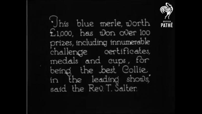 Collie Close Up (1926)
