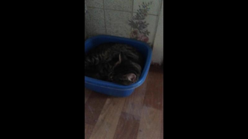 Олькин кот 2.0