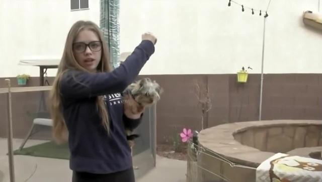 храбрая Сесилия отстояла своего йорка в схватке с краснохвостым ястребом. Лас-Вегас 15 февр 2019 coub