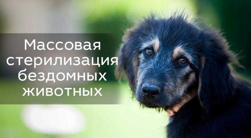В Северодонецке приступили к работе по стерилизации бродячих животных