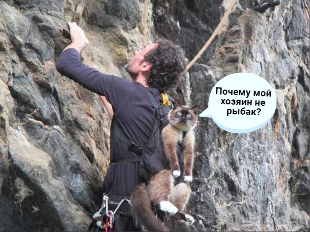 В поход очень хотелось, а кота оставить не с кем)))