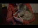 Клип группа Жуки-болтик в гаечку вкручиваю