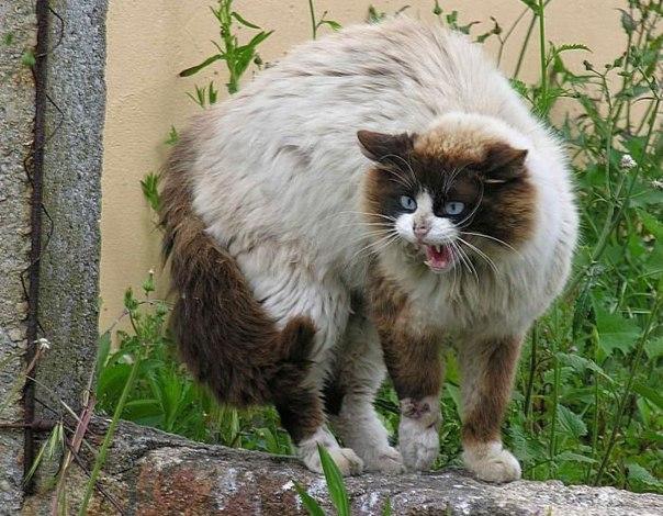Разные смешные и красивые кошки