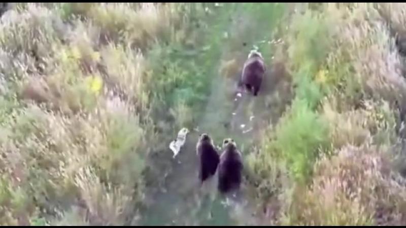 380378-medvedi-obzavelis-svoim-sobstvennim-psom-18-nevsedoma.com.ua.mp4