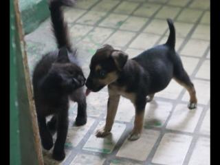 Ляля и Ника играют
