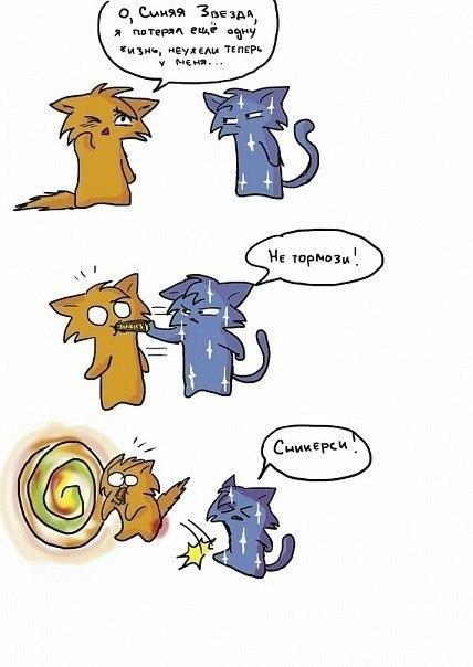раскрасок коты-воители картинки