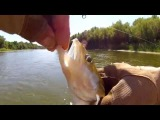 PANIC - SV Fishing Lures
