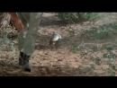 Боги, наверное, сошли с ума 2 (The Gods Must Be Crazy II) 1989