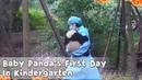 Baby Panda's First Day In Kindergarten | iPanda
