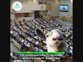 Закон о защите животных | АКУЛА