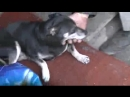 001_сашка губошлёп гладит своего оберегатея -собаку-при певце ПРОРОКЕ САН БОЕ.