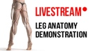Proko Anatomy Livestream - Drawing the Hamstrings
