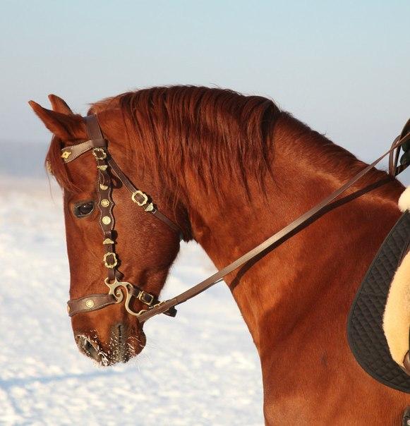Хакамора для лошади своими руками
