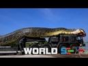 Анаконда - самая большая и опасная змея в мире National Geographic