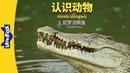 Meet the Animals 3: Nile Crocodile (认识动物 3:尼罗河鳄鱼)   Level 2   Chinese   By Little Fox