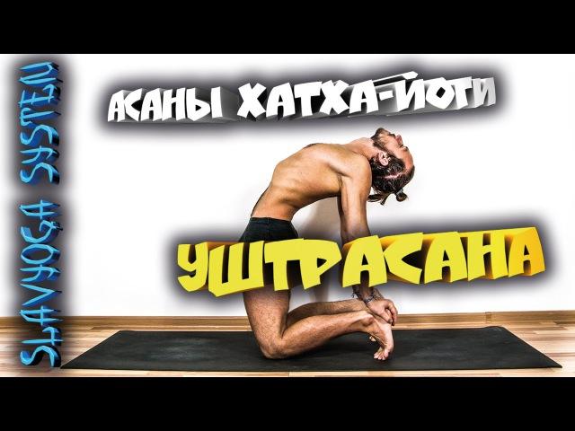 Уштрасана (поза верблюда) ⚡ Асаны хатха йоги 💎 Йога для начинающих ⭐ SLAVYOGA