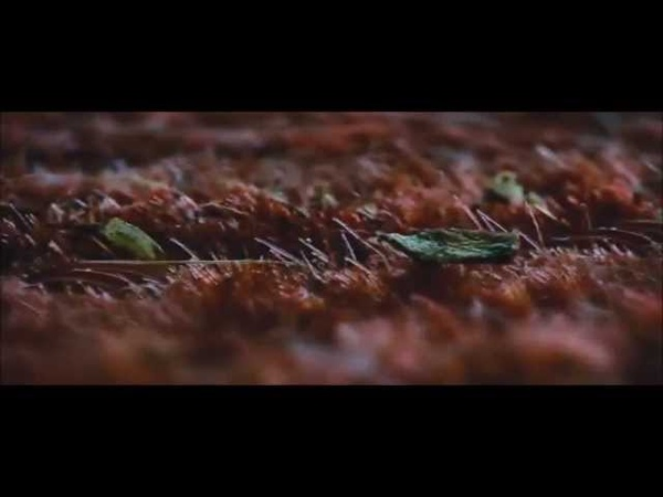 Imagine Dragons 'Demons' Breaking Dawn 2