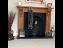 Cat Can't Climb Fireplace Mantle - 993113