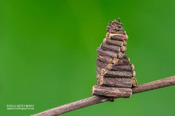 Макрофотографии самых маленьких архитекторов нашей планеты. Сингапурский фотограф Ники Бэй внимательно следит за крошечными существами, используя макросъемку, чтобы выделить каждую мельчайшую