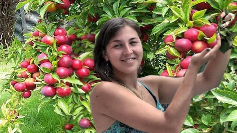 Aloo bukhara tree Aloo bukhara is a fruit