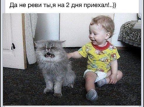 приколы смеяться до слез:
