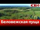 Беловежская пуща новое видео с коптера