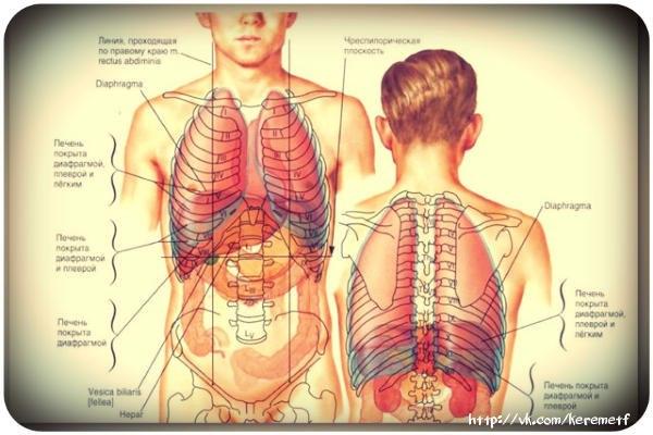 Папиллома под языком – лечение, фото, к какому врачу.