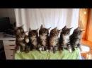Забавные синхронные котята!