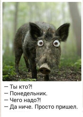 Доброго утра, Екатеринбург