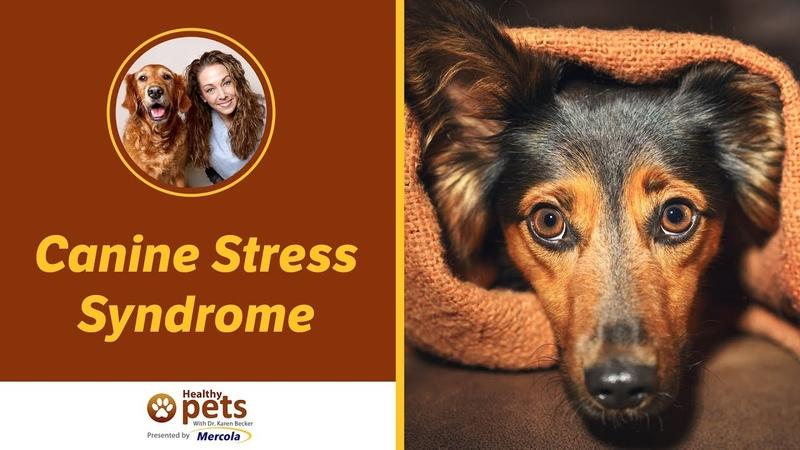 Стресс-синдром у собак / Canine Stress Syndrome