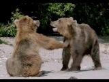 «Земля медведей» 2014 / Трейлер / Документальный фильм о дикой природе / На русском