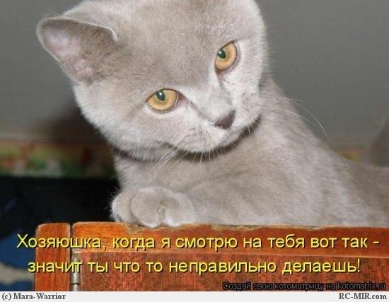 Звери в теме;) 5jsqkqQh-jg