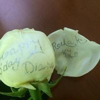 Как выложит фрукты красиво фото пошагово