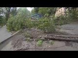 Рухнувшее дерево и столб! Нижний Новгород (16.08.2014)