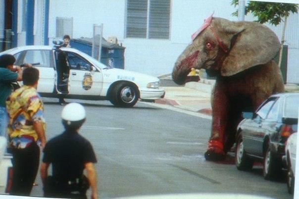 Слониха Тайк Слониха Тайк была поймана в саванне Зимбабве и переправлена в США для работы в бродячем цирке, где её регулярно дисциплинировали остроконечным стрекалом для слона. В 1994 году после 20 лет неволи и пыток, терпение Тайк достигло своего предела в Гонолулу, где она прорвалась через заграждения ринга и стремительно направилась к выходу. Она гонялась за клоунами и дрессировщиками, переворачивала машины и затем вырвалась на улицы Гонолулу, чтобы сбежать из рабства. Полицейские…